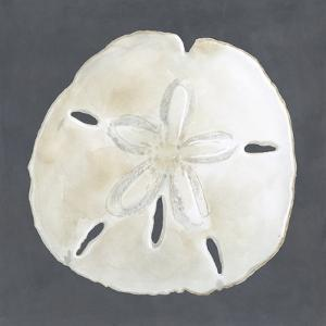 Shell on Slate II by Megan Meagher