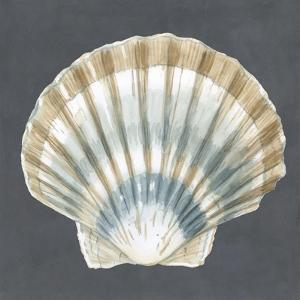 Shell on Slate III by Megan Meagher