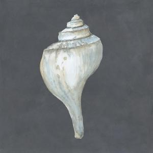 Shell on Slate IV by Megan Meagher