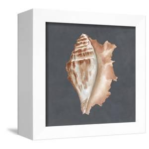 Shell on Slate IX by Megan Meagher