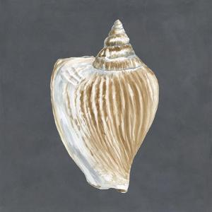 Shell on Slate VI by Megan Meagher