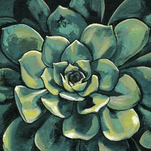 Succulent Bloom I by Megan Meagher