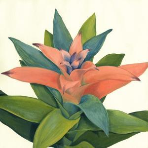 Tropical Bloom IV by Megan Meagher