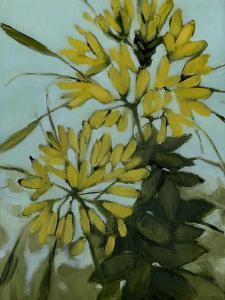 Yellow Cleome by Megan Moore
