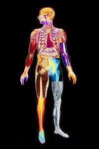 Body Imaging by Mehau Kulyk