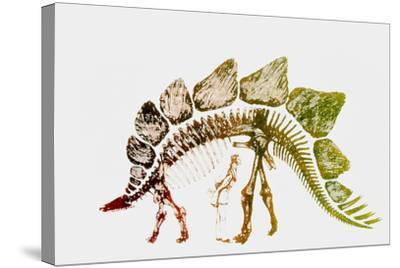 Coloured Engraving of a Stegosaurus Dinosaur