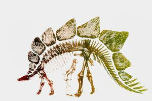 Coloured Engraving of a Stegosaurus Dinosaur by Mehau Kulyk
