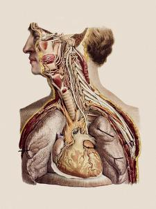 Cranial Nerves by Mehau Kulyk