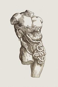 Digestive System by Mehau Kulyk