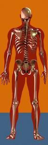 Skeleton, Artwork by Mehau Kulyk