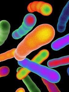 Tuberculosis Bacteria, Artwork by Mehau Kulyk