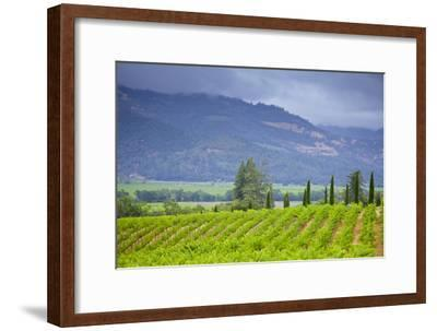 View of a Vineyard in Napa Valley, California