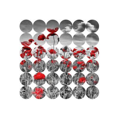 Poppies by Melanie Viola