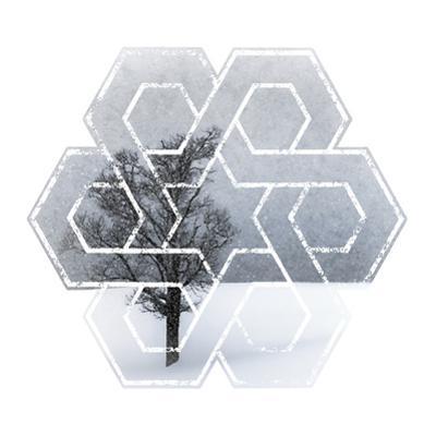 Wintertime Lonely Tree by Melanie Viola
