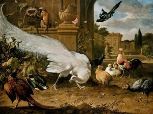 The White Peacock by Melchior d'Hondecoeter