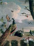 Revolt in the Poultry Coup-Melchior de Hondecoeter-Giclee Print