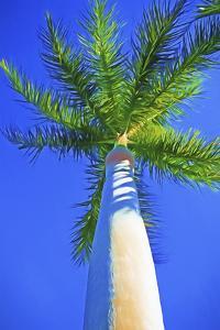Blue Sky Palm II by Melinda Bradshaw