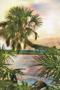 Leaning Palm by Melinda Bradshaw