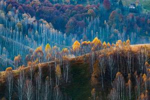 Shades of Fall by Melinda Nagy
