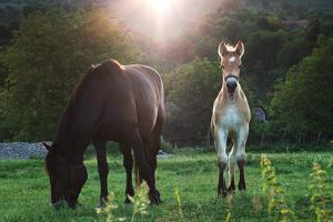 Horses Grazing In Sunset Lights by melis