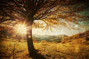 Lonely Beautiful Autumn Tree by melis