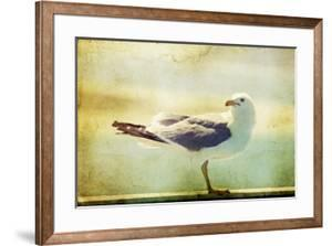 Vintage Photo Of A Seagull-Artistic Retro Styled Picture by melis