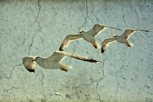 Vintage Photo Of Flying Seagulls by melis