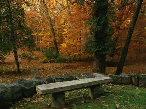A Bench in a Wooded Setting of Trees in Fall Foliage by Melissa Farlow