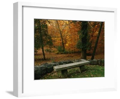 A Bench in a Wooded Setting of Trees in Fall Foliage