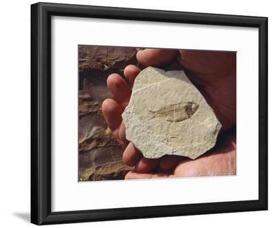 A Fish Fossil is Held in the Palm of a Hand