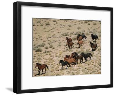 A Herd of Wild Horses Gallops Across the Dry Terrain