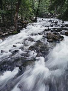 A Shallow Woodland Stream Tumbles over its Rocky Bed by Melissa Farlow