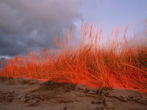 Dunes on the Pierce Stocking Scenic Drive by Melissa Farlow