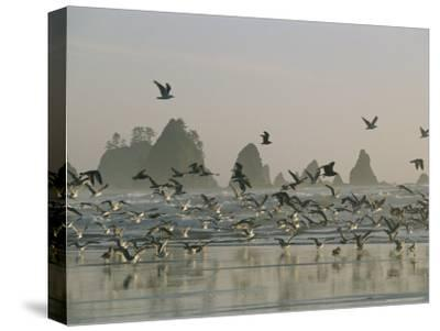 Flock of Gulls on a Beach with Sea Stacks