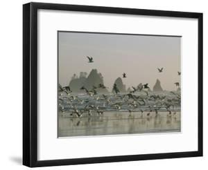 Flock of Gulls on a Beach with Sea Stacks by Melissa Farlow