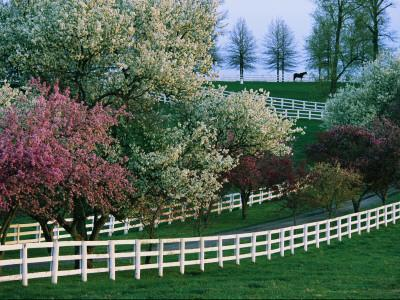 Flowering Crab Apple Trees Bloom on Manchester Farm's Grounds