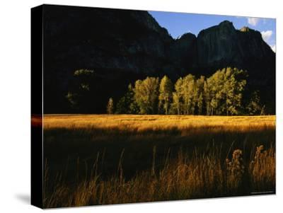 Late Day Sun Lights a Meadow in Yosemite National Park