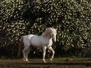 Mustang Stallion in the Wild Horse Sanctuary by Melissa Farlow
