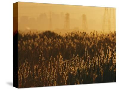 The Marshes of the Meadowlands Glitter with Sunlight