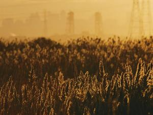 The Marshes of the Meadowlands Glitter with Sunlight by Melissa Farlow