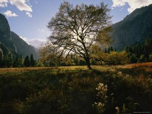 View of a Meadow in Yosemite National Park by Melissa Farlow