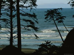 View Through Silhouetted Evergreen Trees at Gentle Pacific Surf by Melissa Farlow