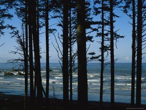 View Through Silhouetted Evergreen Trees of the Pacific Ocean by Melissa Farlow