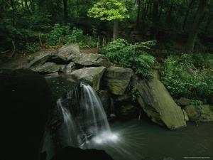 Water Splashes over a Waterfall in a Central Park Wood by Melissa Farlow