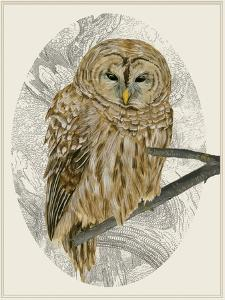 Barred Owl I by Melissa Wang