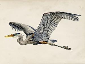 Blue Heron Rendering III by Melissa Wang