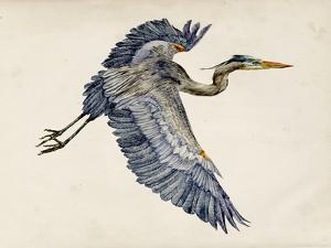 Blue Heron Rendering IV by Melissa Wang