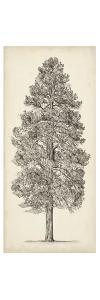 Pacific Northwest Tree Sketch III by Melissa Wang