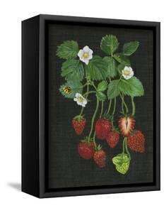 Strawberry Fields II by Melissa Wang