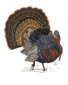 Turkey Study I by Melissa Wang